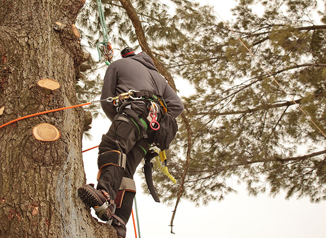 All Seasons Tree Care employee trimming a tree