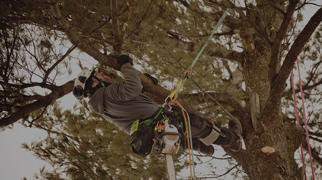 All Seasons Tree Care: Emergency tree removal in Manchaca, New Braunfels and Buda