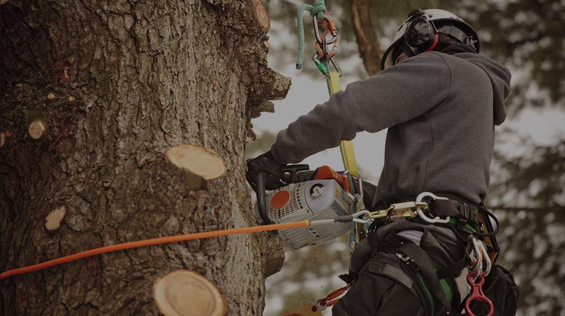All Seasons Tree Care: Stump and tree removal in Manchaca, New Braunfels and Buda