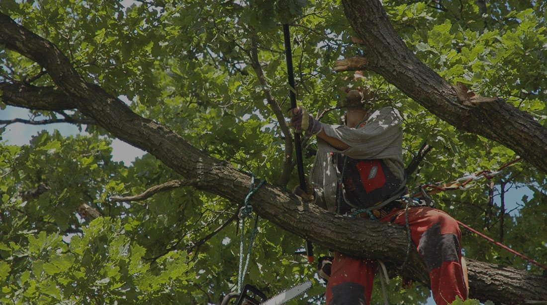 All Seasons Tree Care: Tree cabling and bracing in Manchaca, New Braunfels and Buda