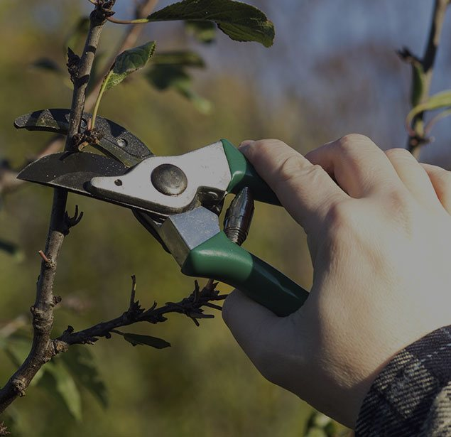All Seasons Tree Care: Tree pruning in Manchaca, New Braunfels and Buda